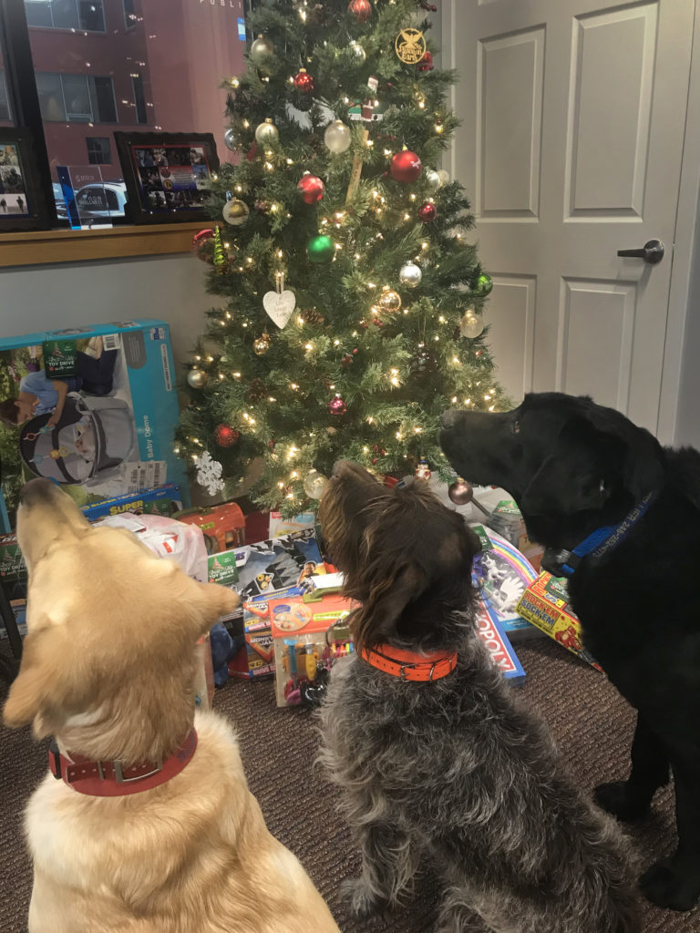 JetCo Office Dogs Sitting in Front of Christmas Tree