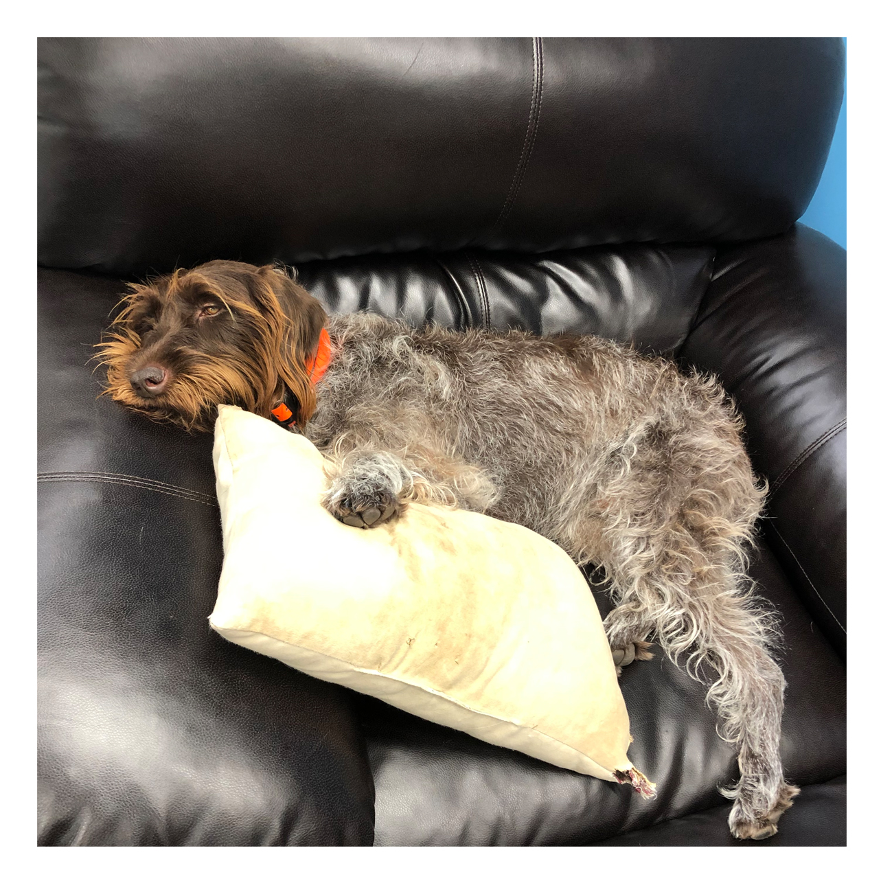 Maddie with Pillow