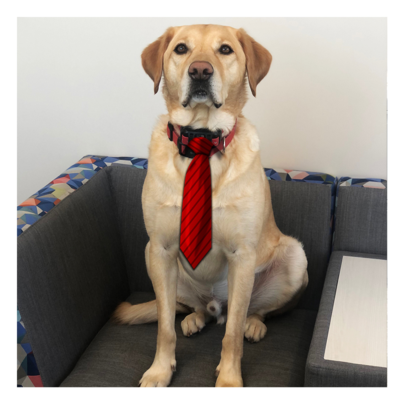 Rocco with tie
